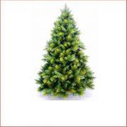 570004-Oxford Spruce